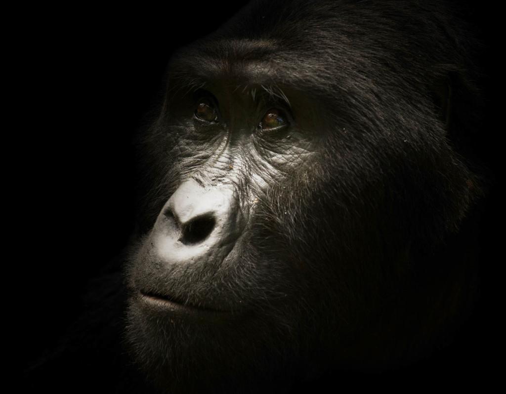 Animals_46111-1024x797.jpg